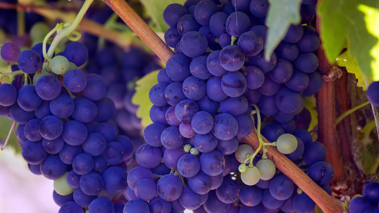 Tout savoir sur le vin AOC
